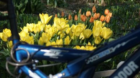 Fahrradrouten: In Hamburg schön Kilometer machen