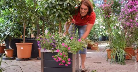 Praxis-Tipp: Kübel richtig bepflanzen