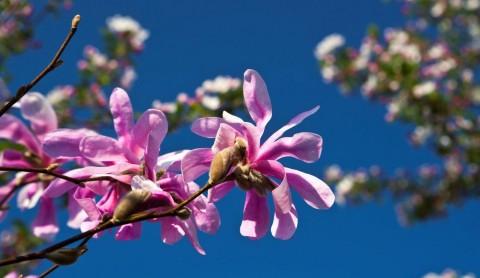 Ab ins Beet: Frühlingsglück durch Gartenarbeit
