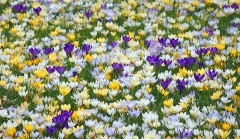 Hamburg blüht auf: Frühling!