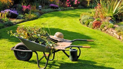 Alles Grün? Herbstkur für den Rasen