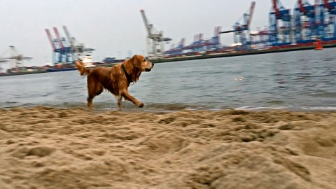 Video: Hundespaß am Elbstrand