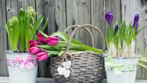 Frühlingserwachen an Elbe und Alster