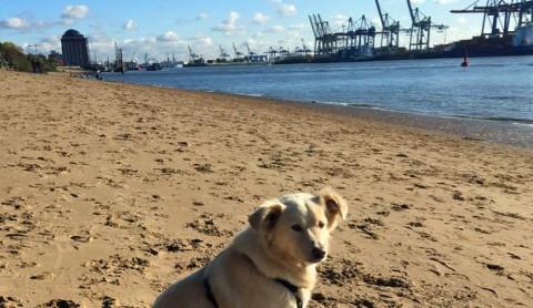 Hundespaß in Hamburg